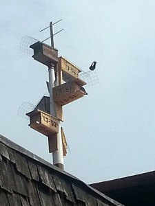 Purple Martin boxes